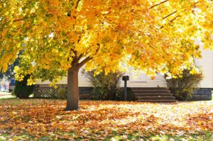 The Fall Checklist for your Lawn