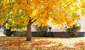 Lawn garden and deciduous tree care for the fall