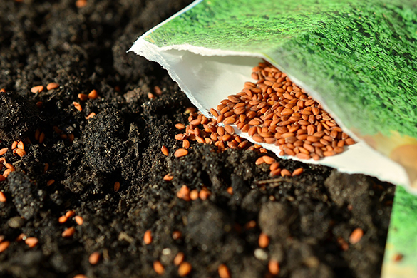 Summer garden diy tips and ideas growing from seeds