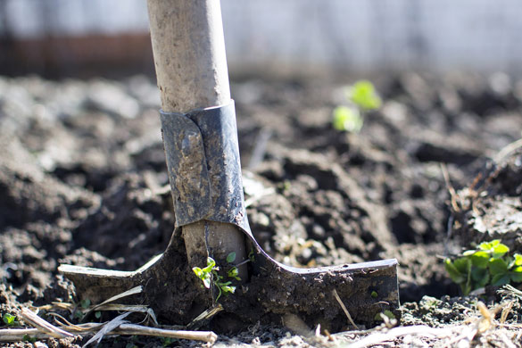 Winter garden soil preparation and tilling for spring planting