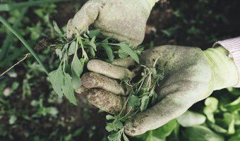 Summer garden diy tips and ideas for all gardeners